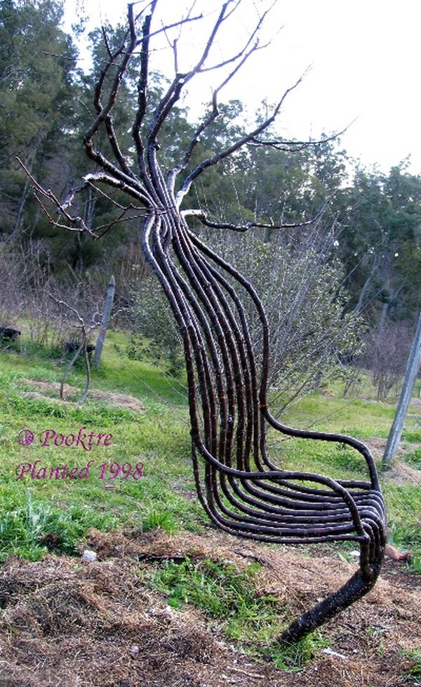 The Unusual Tree Shapes | Weird Things, Weird Pictures ...