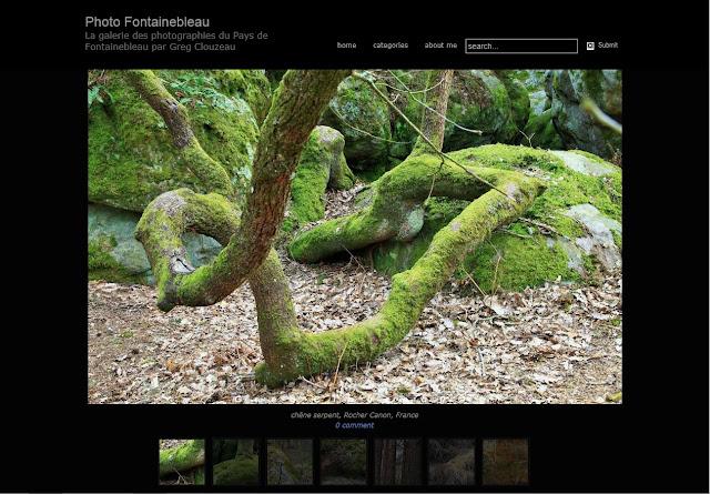 http://photofontainebleau.blogspot.fr