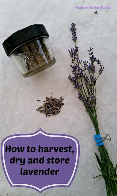 harvest, dry,  fresh lavender