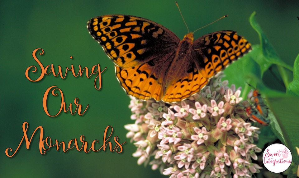 Our Monarch Butterfly population is declining. Students can learn different ways they can help in this blog post. I've shared my Monarch Butterfly Life Cycle Unit and Project Based Learning Unit.