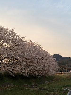 イメージ画像:桜