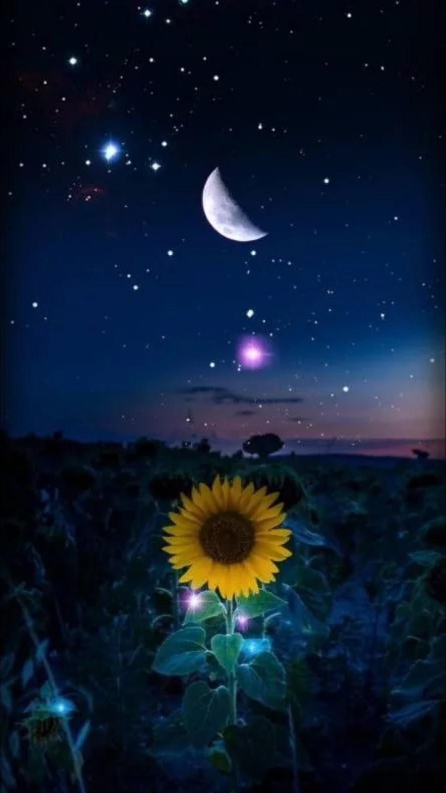 Sunflower under the moon