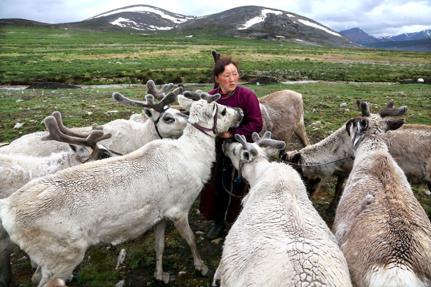 Tsaatan people move from one place to another without establishing any permanent settlements during the year - Meet The Tsaatan Nomads In Mongolia Who Live Like No One Else