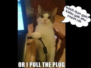 Kucing lucu ngomong