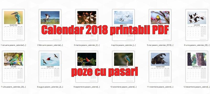 Calendar 2018 Printabil Pdf Poze Cu Pasari Calendar 2019