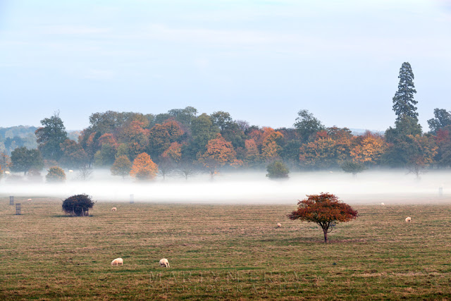 Mist covers the ground beneath autumn trees in Cambridgeshire