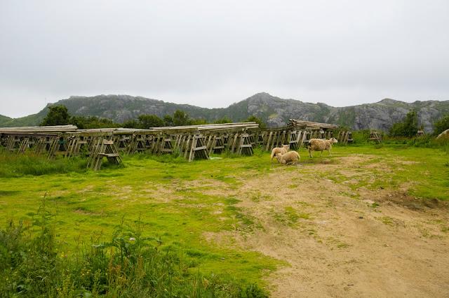 Unstad-Isola Lofoten