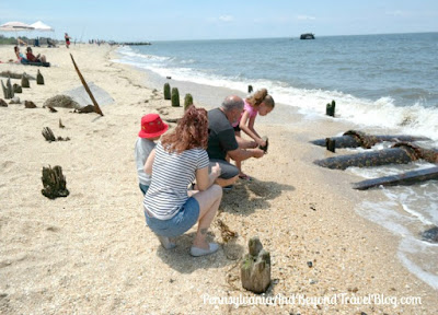 Horseshoe Crab Conservation on Highbee Beach in Cape May, New Jersey
