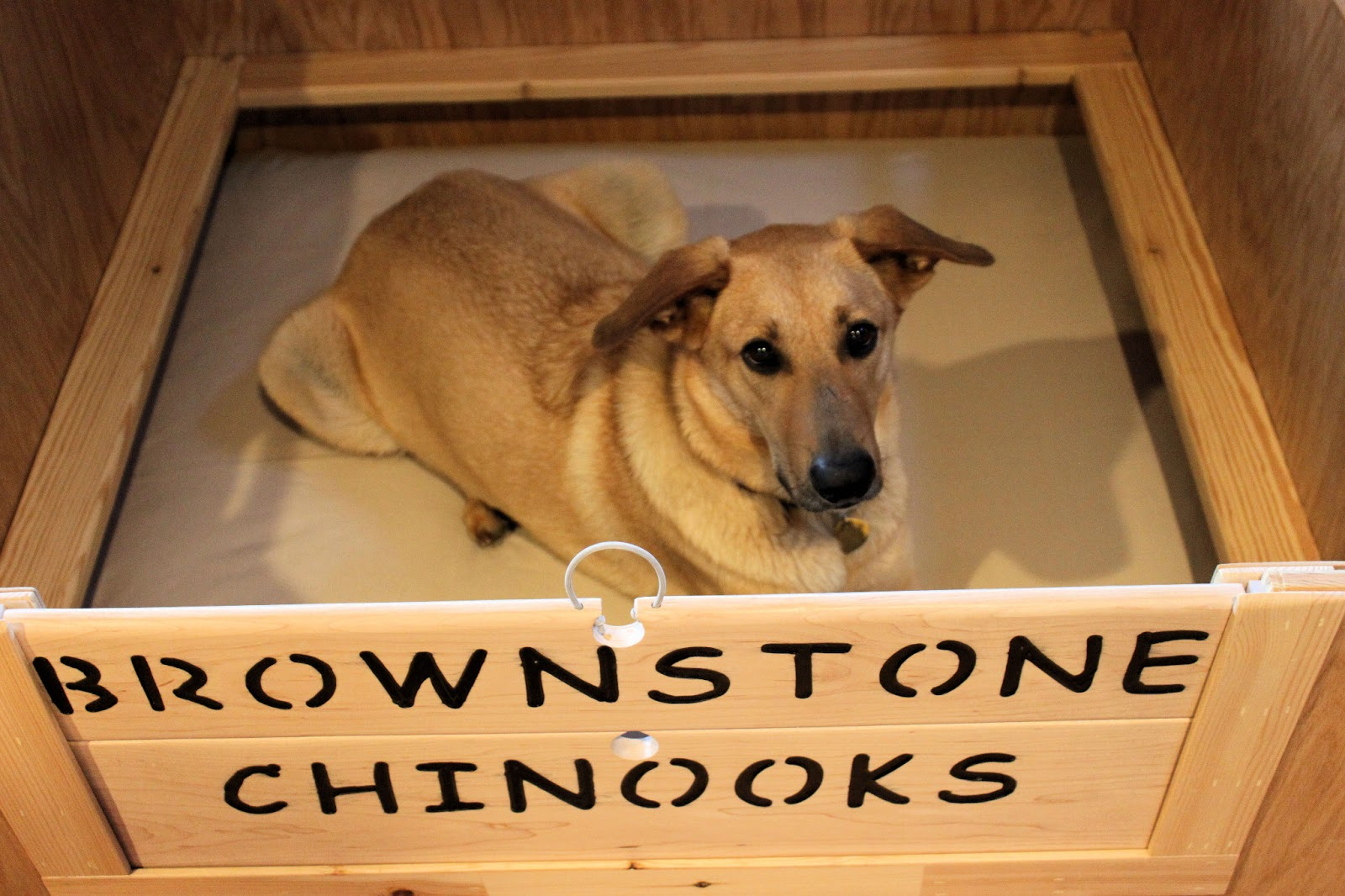 Brownstone Chinooks Boxed And Ready