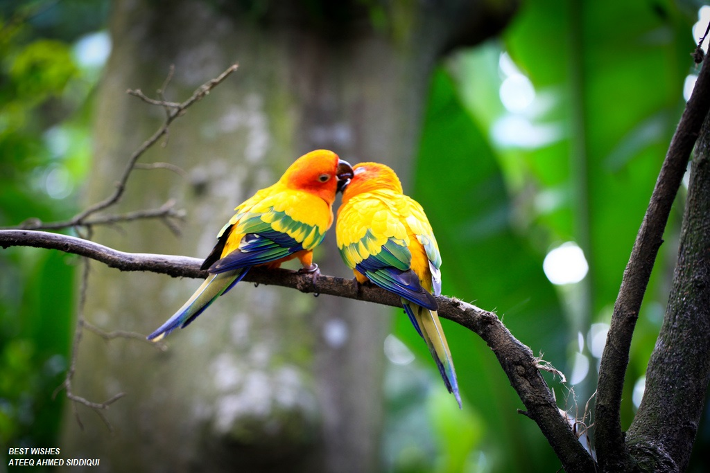 Love Birds Pictures Download: High Resolution Pictures, Nice Pictures, Best Scienaries