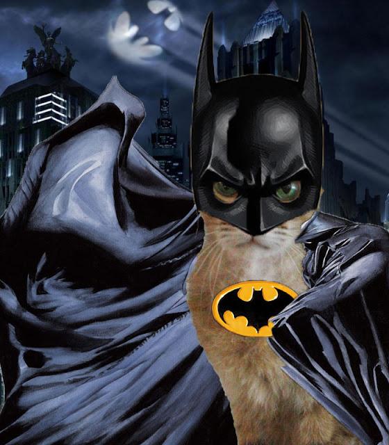 batcat cat and batman photoshop funny doodle