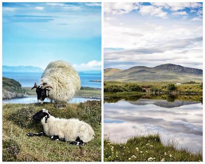 Île de Skye: moutons et paysage