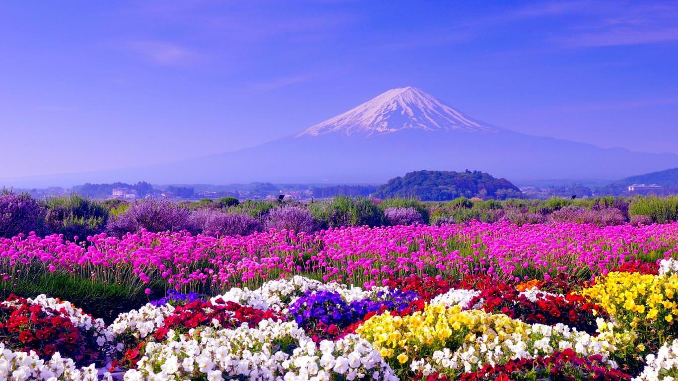 Wild Spring Flowers Free Hd Wallpaper