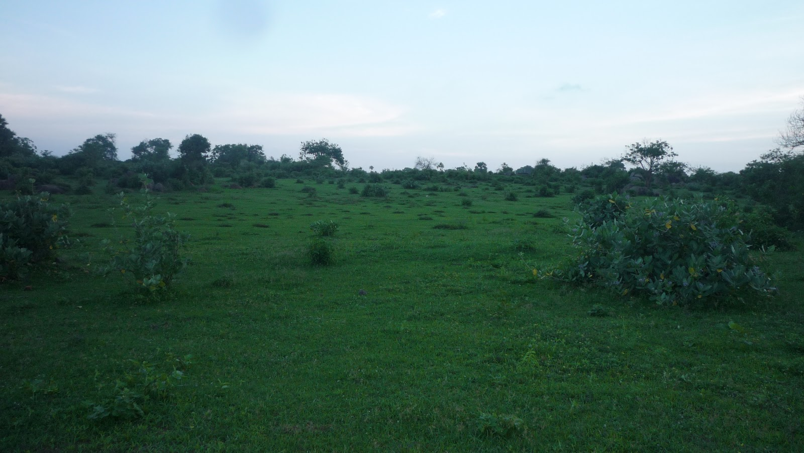 Arugambay Lands Sale