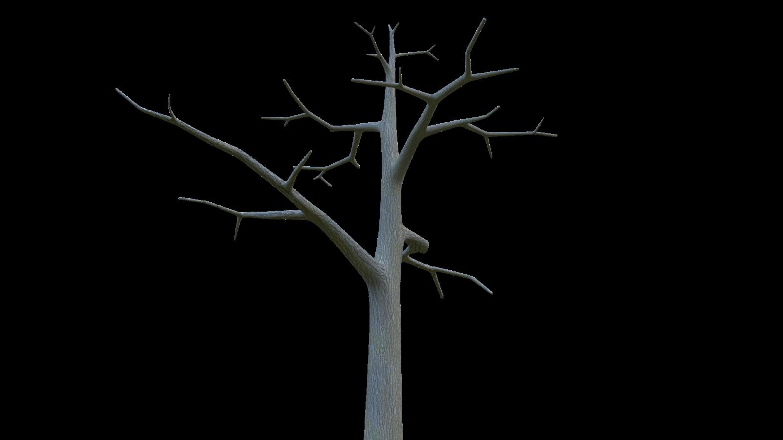 Free 3D Barren Tree CC0 3DS - Free 3D Models Under Public Domain