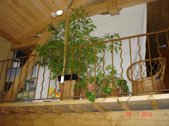 notre maison en bois cologique relier ce qui est en haut. Black Bedroom Furniture Sets. Home Design Ideas