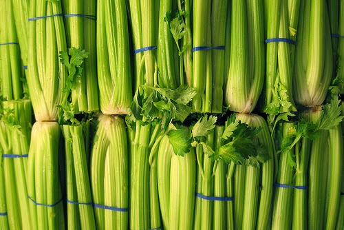 celery ribs from a supermarket  (cc) daniel james on flickr (link)