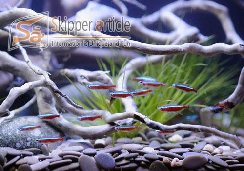 Aquarium Care for Freshwater Fish
