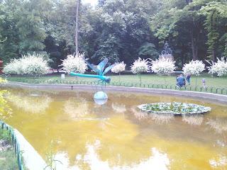 Dragonfly, Hovering, Pond, Yambol City Park, Yambol,
