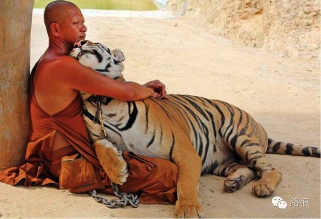佛口蛇心⋯⋯⋯⋯泰國虎廟,真是人面獸心!