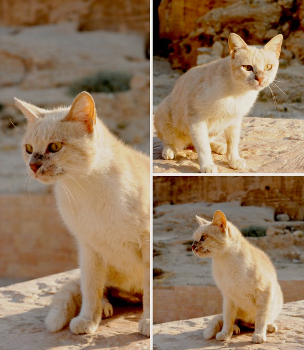 petra ancient city cats