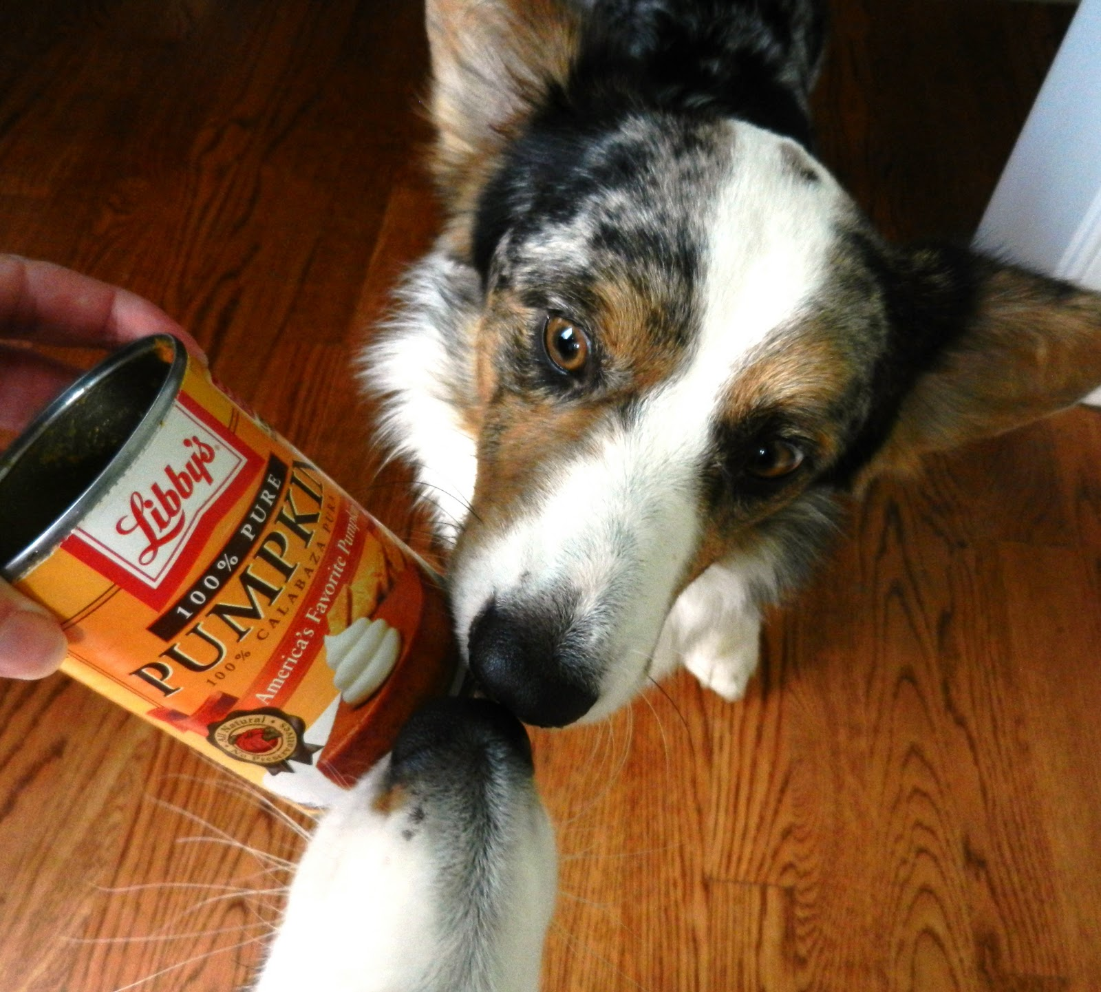 Image Result For Can Dog Ate