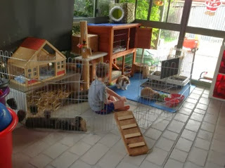 Rabbit Playpen with Hutch Near Door to Garden
