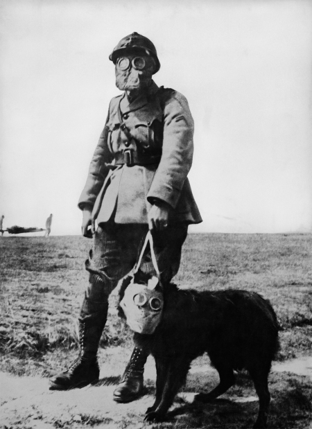 BBC History pays tribute to WW1 pigeons | The Royal Pigeon ... |Wwi Messenger
