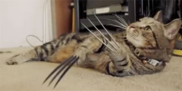 X-Men Origenes: Wolverine Cat