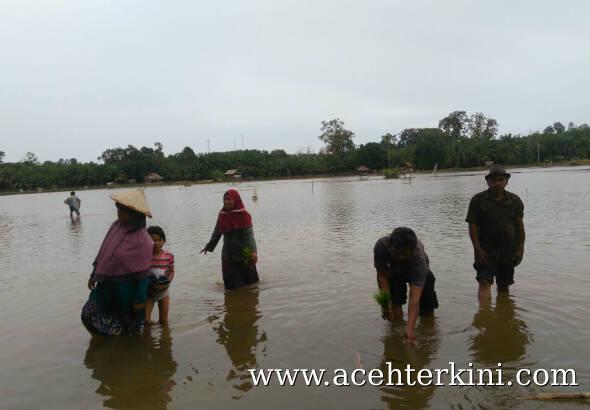 Banjir, Puluhan Hektar Tanaman Padi di Aceh Singkil Gagal Tanam