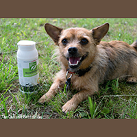 Only Natural Pet EasyDefense All-In-One Flea Remedy Review