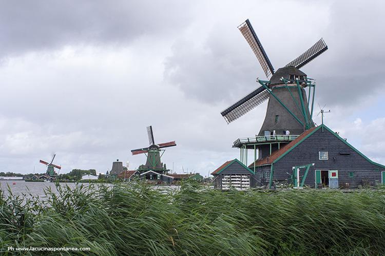 Amsterdam e Belgio su due ruote