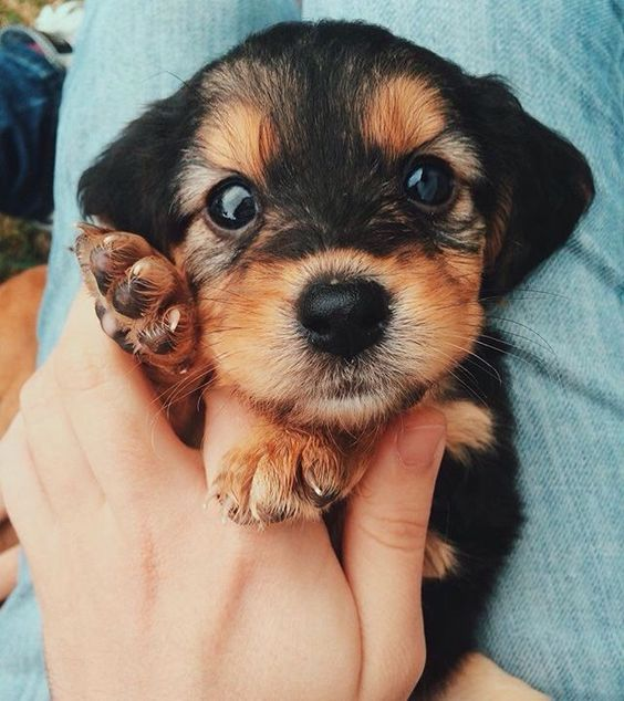 Top 5 Cutest Small Dogs