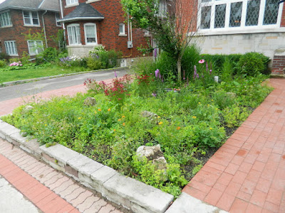 Avenue Road Toronto Front Garden Clean up Before by Paul Jung Gardening Services