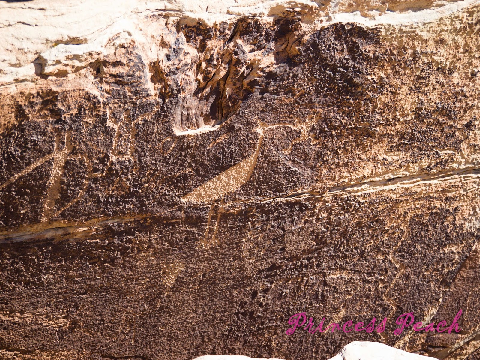 Petrified-Forest-National-Park-石化森林國家公園-Petroglyph