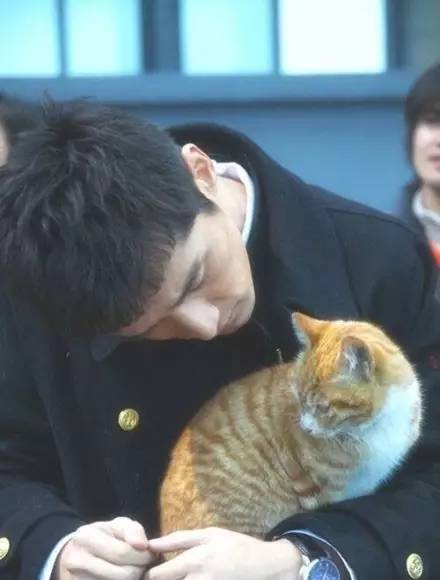 Hu Ge cats