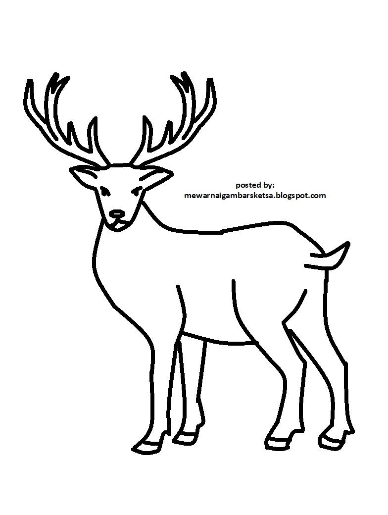 90+ Gambar Animasi Binatang Melata Terbaru