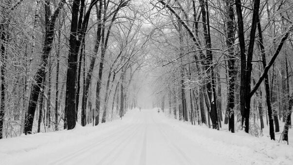 Desktop HD Wallpaper Avenue Trees Winter Snow 602x339