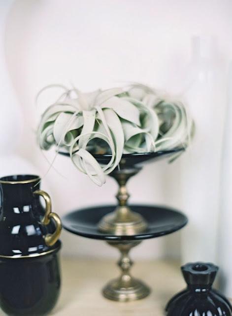 O charme e praticidade das Air Plants na decoração de casamentos