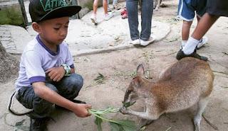 Kebun Binatang Gembira Loka Yogyakarta