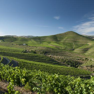 Barca Velha 2008 - Saber esperar para criar um vinho mítico.