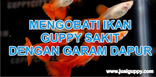 Ikan Guppy Sakit, Obat Guppy, Guppy ku Sakit, Apa obatnya, DOkter Hewan GUppy