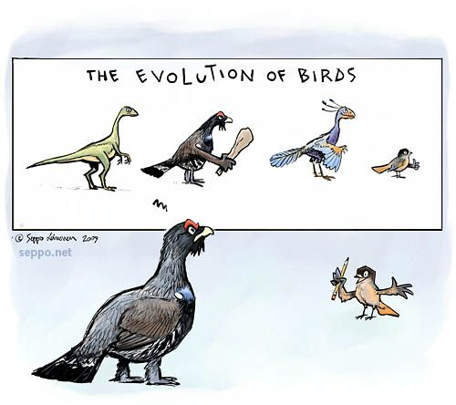 Evolution an examination of the relation of dinosaurs and birds