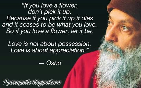 Osho Quotes Best Best Quotes For Friends Osho's Quotes On Love Life Relationship