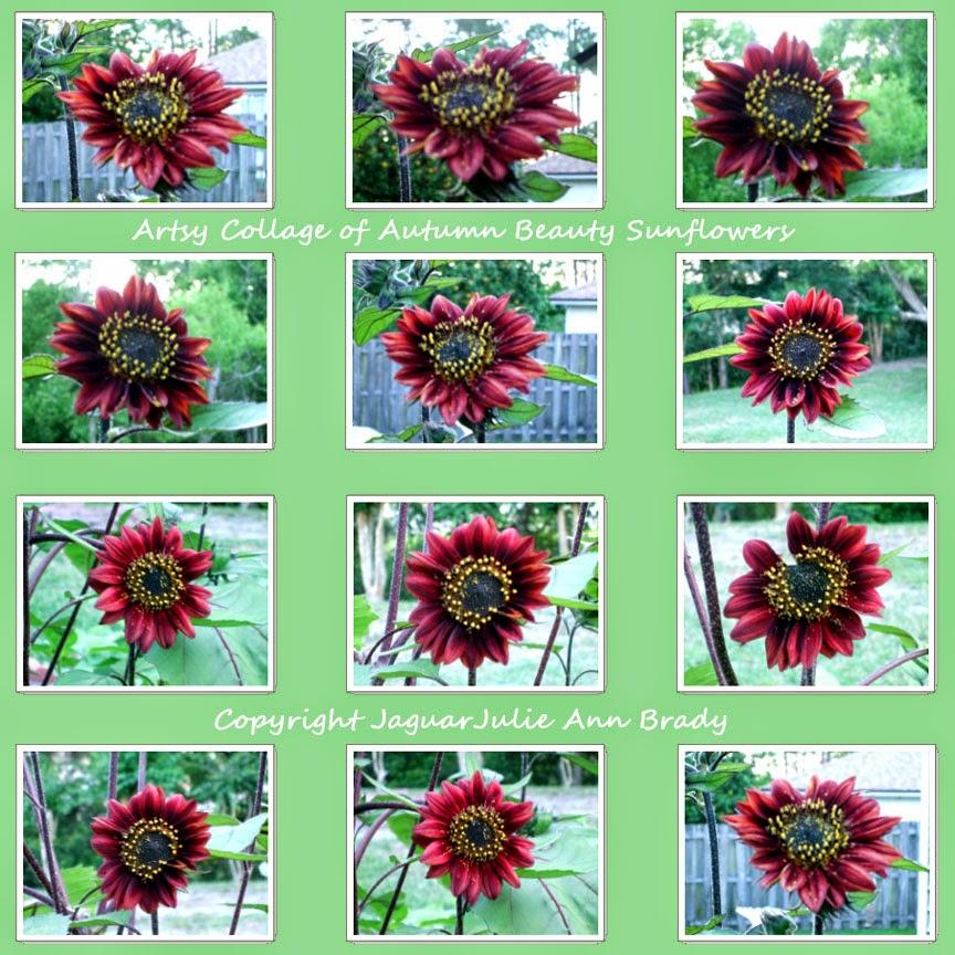 artsy autumn beauty sunflower collage on green