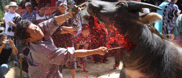 Indonesia Rituals Weddings And Funerals: Kharisma Toraja: Toraja Funeral Ceremony