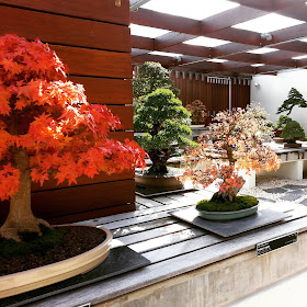 Display of bonsai trees in autumn.