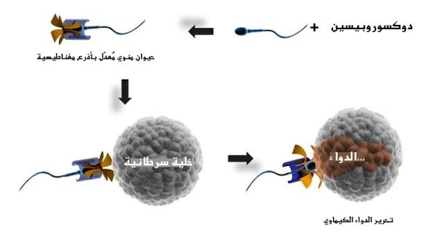 spermbots holding adriamycine