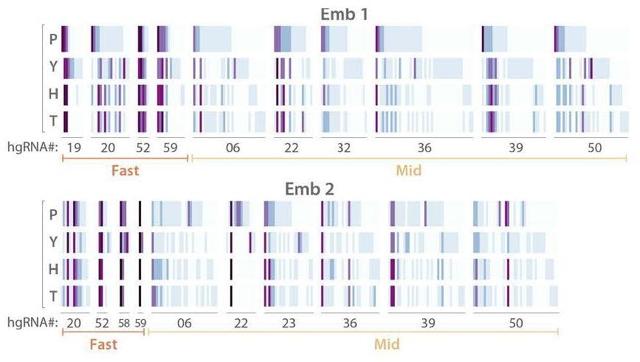 Código de barras real de dos embriones de ratón (1 y 2). KALHOR