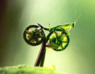 Praying mantis riding a motorbike
